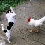 「面白い動物」あり得ないことをする犬, 猫・おもしろ犬, 猫のハプニング, 失敗集 #48