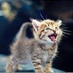 野良猫 泣ける話・人に捨てられ、いつもお腹をすかせ、挙句に病気になって苦しみながら 死んでいったあの子猫を考えると不憫でなりません・招き猫ちゃんねる
