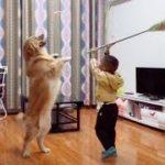 「面白い動物」あり得ないことをする犬, 猫・おもしろ犬, 猫のハプニング, 失敗集 #30