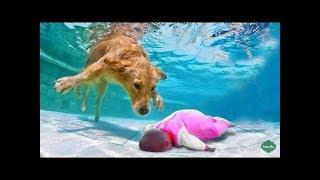 「泣けるほど感動」犬達が溺れている飼い主の命を助けた時の瞬間