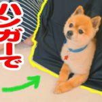愛犬のためのDIY!ハンガーで簡単犬小屋!【ドッグパッドチャンネル】 #4