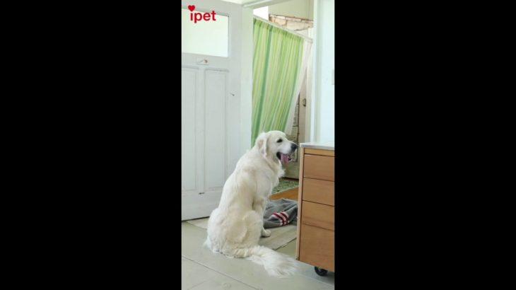 衛藤美彩 #Whatthefluffchallenge|乃木坂46×ipet 「犬と、猫と、乃木坂と。」