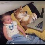 「面白い動物」あり得ないことをする犬, 猫・おもしろ犬, 猫のハプニング, 失敗集 #98
