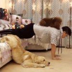 「絶対笑う」最高におもしろ犬,猫,動物のハプニング, 失敗画像集 #421