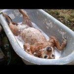 「面白い動物」あり得ないことをする犬, 猫・おもしろ犬, 猫のハプニング, 失敗集 #101