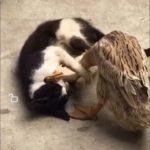 「面白い動物」あり得ないことをする犬, 猫・おもしろ犬, 猫のハプニング, 失敗集 #91