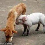 「面白い動物」あり得ないことをする犬, 猫・おもしろ犬, 猫のハプニング, 失敗集 #93