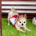 わんちゃん大喜び♪ 室内犬のおしゃれなケージ 【ペットケージ】