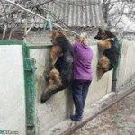「絶対笑う」最高におもしろ犬,猫,動物のハプニング, 失敗画像集 #423