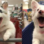 はじめてのスーパーの店内に大喜びの犬。