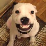 「おもしろ犬 」思わずに笑っちゃう犬のハプニング, 失敗動画 – 2018。面白すぎる#1
