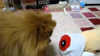 笑える犬猫動画 – ニセ目玉おやじがキセキを起こす