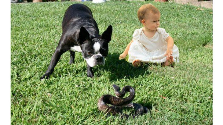 「泣けるほど感動」犬達が飼い主の命を助けた時の瞬間 #2