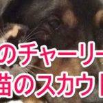 【感動する話】【泣ける話】犬のチャーリーと猫のスカウト