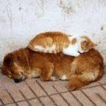 「面白い動物」あり得ないことをする犬, 猫・おもしろ犬, 猫のハプニング, 失敗集 #86