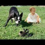 「面白い動物」あり得ないことをする犬, 猫・おもしろ犬, 猫のハプニング, 失敗集 #103