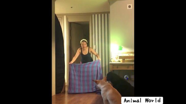 おもしろ犬 タオルマジックに騙されるお茶目でカワイイおもしろ動物まとめ