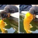「絶対笑う」最高におもしろ犬,猫,動物のハプニング, 失敗画像集 #419