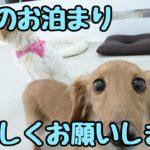 長めのお泊り、よろしくお願いします。 ★24時間対応★犬の保育園 5月18日