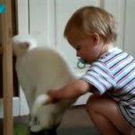【カワイイ】癒されたい方、赤ちゃんとかわいい動物たち!