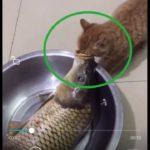 「面白い動物」あり得ないことをする犬, 猫・おもしろ犬, 猫のハプニング, 失敗集 #106