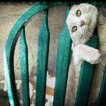 「絶対笑う」最高におもしろ犬,猫,動物のハプニング, 失敗画像集 #424