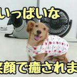 あのパピーMダックス。いい笑顔してやがるぜ・・・ ★24時間対応★犬の保育園 10月29日