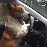 「絶対笑う」最高におもしろ犬, 猫, 動物のハプニング, 失敗動画集・かわいい犬 , 猫, 動物