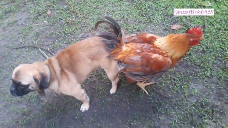 【爆笑】あり得ないことをする犬, 猫・おもしろ犬, 猫のハプニング, 失敗集