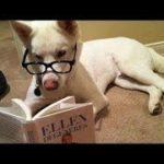 「面白い動物」あり得ないことをする犬, 猫・おもしろ犬, 猫のハプニング, 失敗集 #145