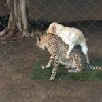 「面白い動物」あり得ないことをする犬, 猫・おもしろ犬, 猫のハプニング, 失敗集 #194