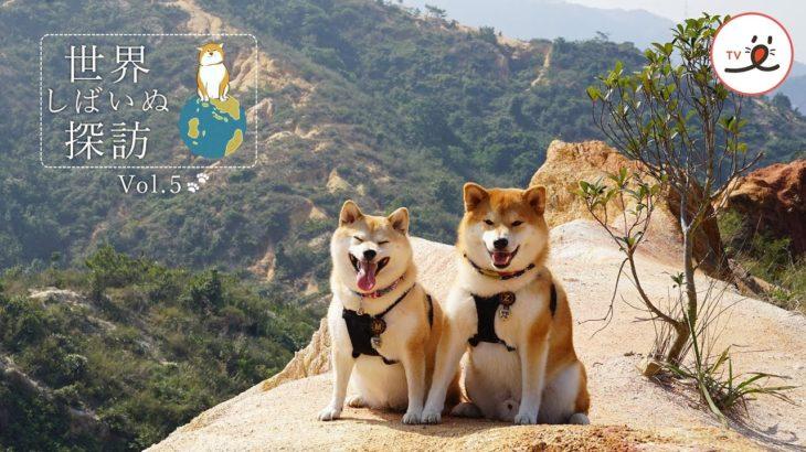 世界しばいぬ探訪vol.5🐕🐾 香港で暮らす「夫婦」のような柴犬たち💕【PECO TV】