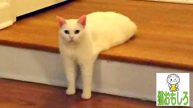 【猫 おもしろ】 – 猫 面白い 鳴き声