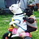 「面白い動物」あり得ないことをする犬, 猫・おもしろ犬, 猫のハプニング, 失敗集 #169