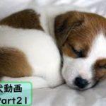 【面白 犬】おもしろ犬動画まとめ!#21【かわいい】