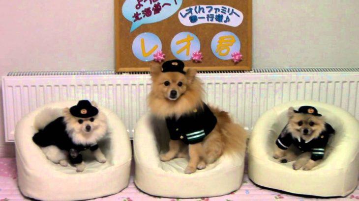 20100911 犬のおまわりさん撮影会
