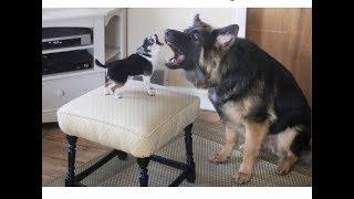「面白い動物」あり得ないことをする犬, 猫・おもしろ犬, 猫のハプニング, 失敗集 #180