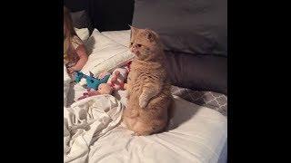 「絶対笑う」最高におもしろ犬,猫,動物のハプニング, 失敗画像集 #428