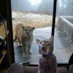 「面白い動物」あり得ないことをする犬, 猫・おもしろ犬, 猫のハプニング, 失敗集 #155