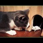 「面白い動物」あり得ないことをする犬, 猫・おもしろ犬, 猫のハプニング, 失敗集 #181