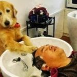 「絶対笑う」最高におもしろ犬,猫,動物のハプニング, 失敗画像集 #427