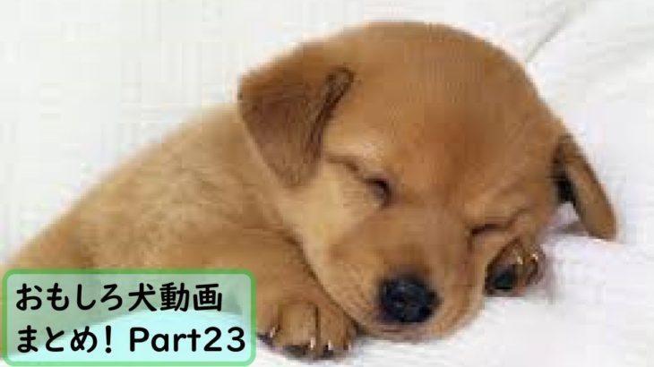 【面白 犬】おもしろ犬動画まとめ!#23【かわいい】