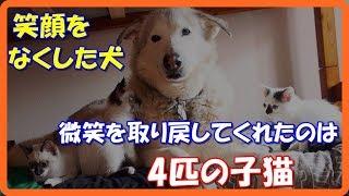 【感動する話泣ける話】深い悲しみで笑顔を失った犬!微笑を取り戻させてくれたのは4匹の子猫達だった!!