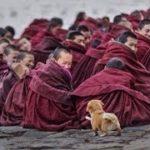 「面白い動物」あり得ないことをする犬, 猫・おもしろ犬, 猫のハプニング, 失敗集 #195
