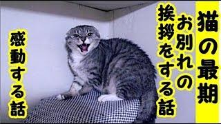 【感動 泣ける話】不器用で人に懐かない猫が自分の最期に飼い主に感謝とお礼とお別れの挨拶をする話・招き猫ちゃんねる