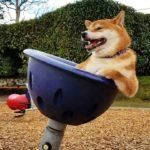 「面白い動物」あり得ないことをする犬, 猫・おもしろ犬, 猫のハプニング, 失敗集 #174