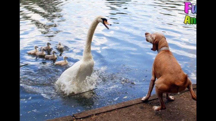 「面白い動物」あり得ないことをする犬, 猫・おもしろ犬, 猫のハプニング, 失敗集 #179