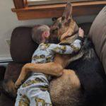 #2【犬と赤ちゃん】絶妙な関係! 仲良しすぎ! 何をされても怒らない・かわいい犬と赤ちゃん