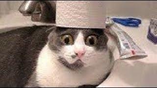 「おもしろ犬, 猫」最高におもしろ犬, 猫のハプニング動画選