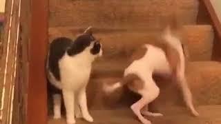 猫にびっくりした犬が大暴走!!